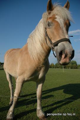 pony te langeveen